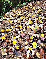 sentiero in autunno