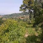 collina di Carmignano