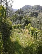 sentiero verde a Bacchereto
