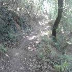 sentiero in estate a Bacchereto