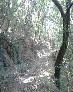 sentiero nel bosco di Bacchereto