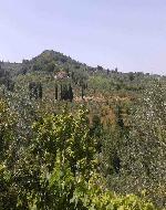 colle del Montalbano visto da Bacchereto